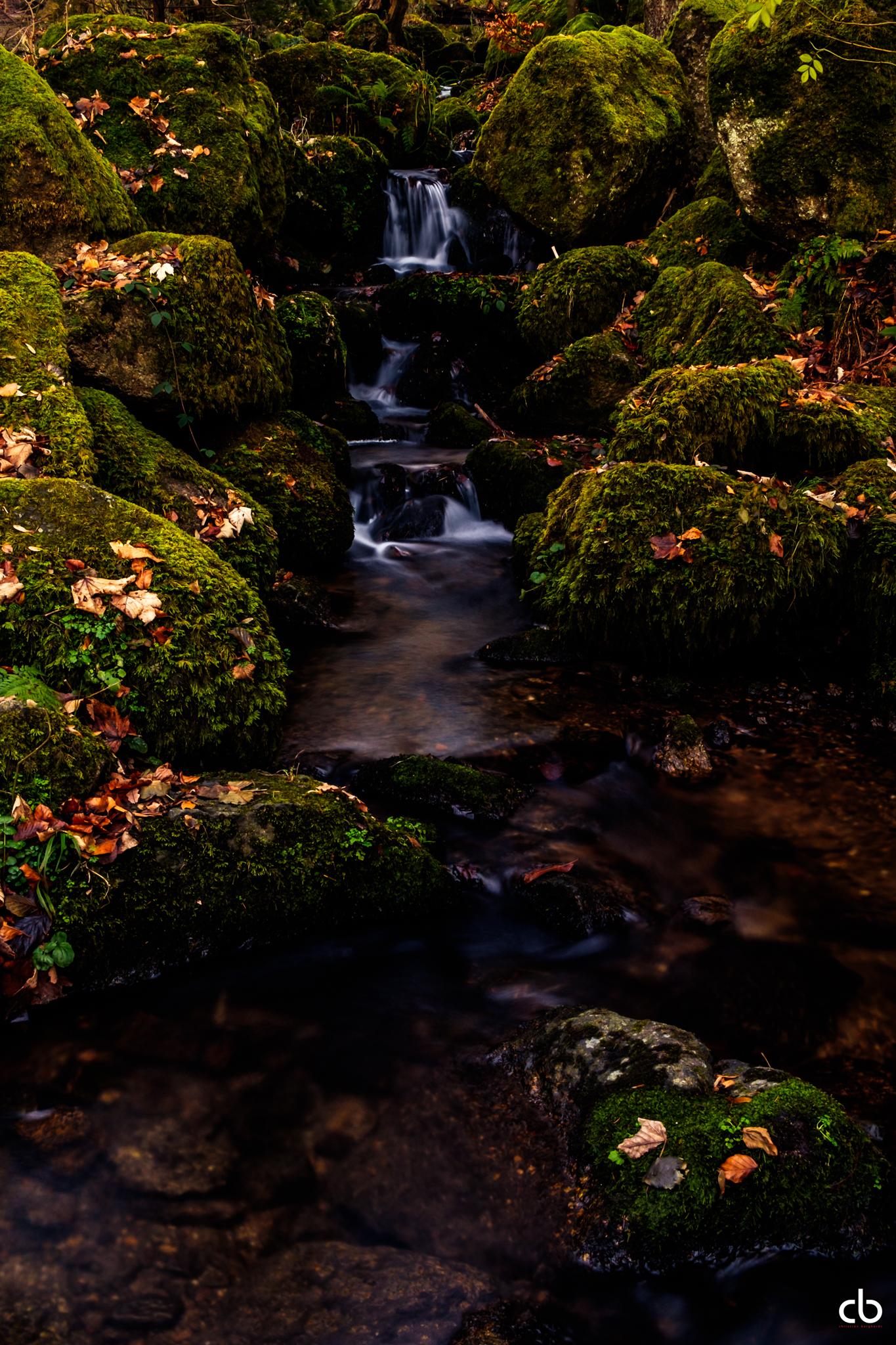 Im Schwarzwald am Bach