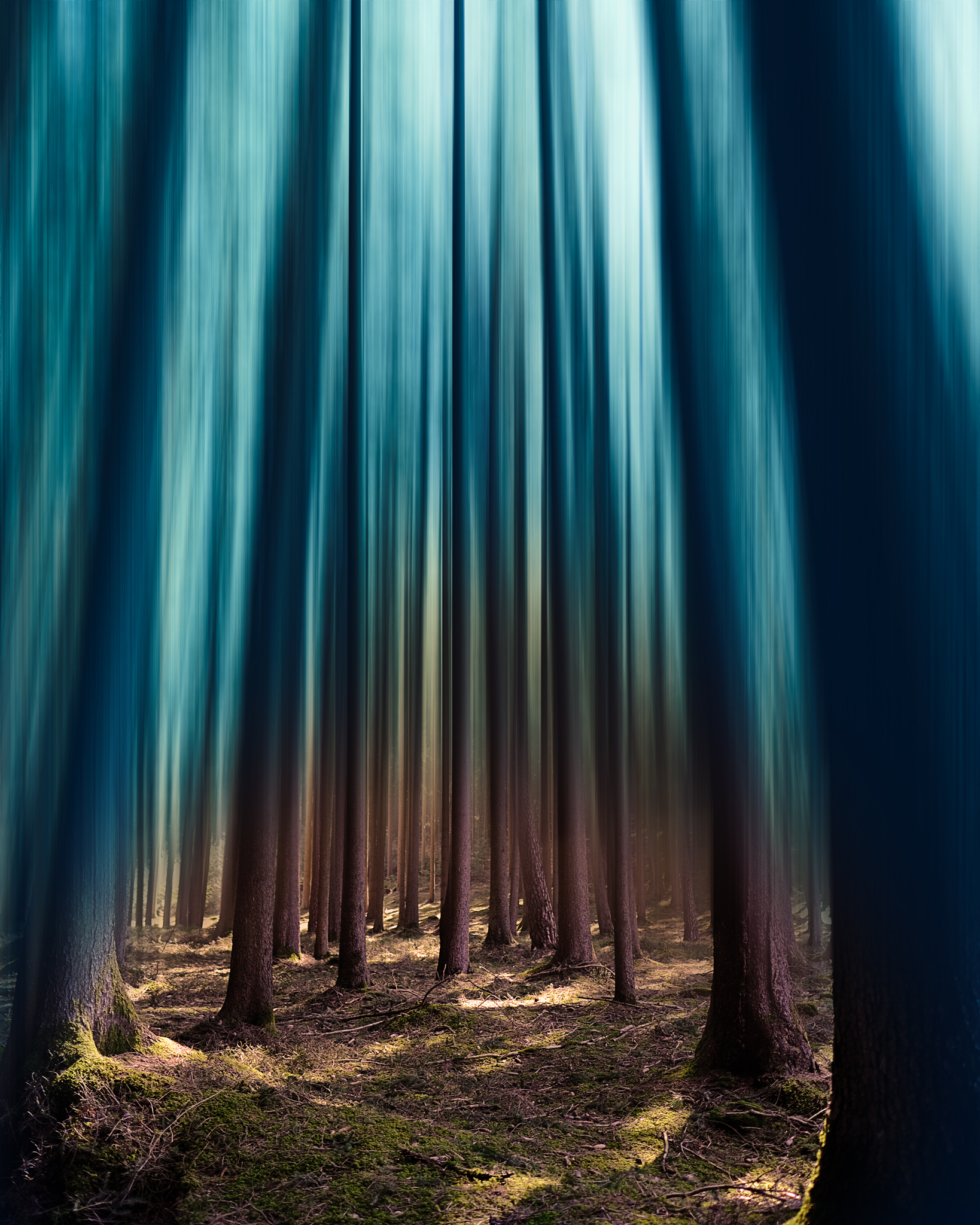 Wald - mal anders