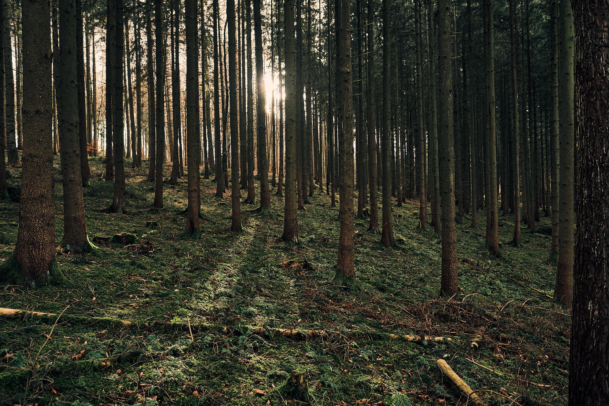 Sabine und der Wald